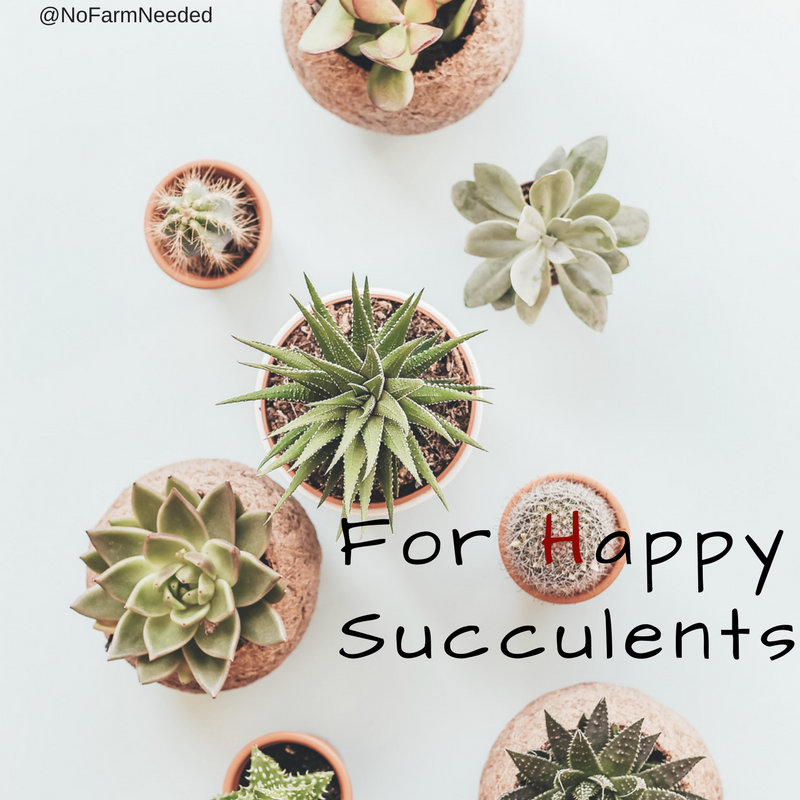 Happy Succulents are the best when creating your Succulent Haven NoFarmNeeded