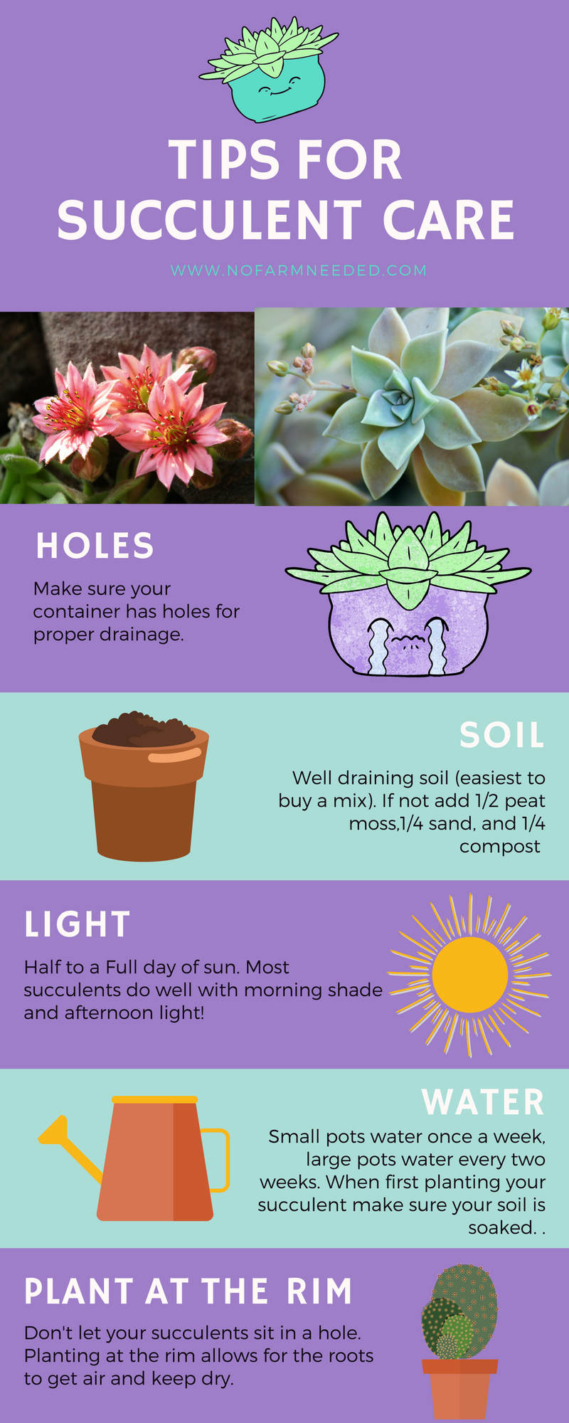 Tips for Planting a Succulent Haven with NoFarmNeeded