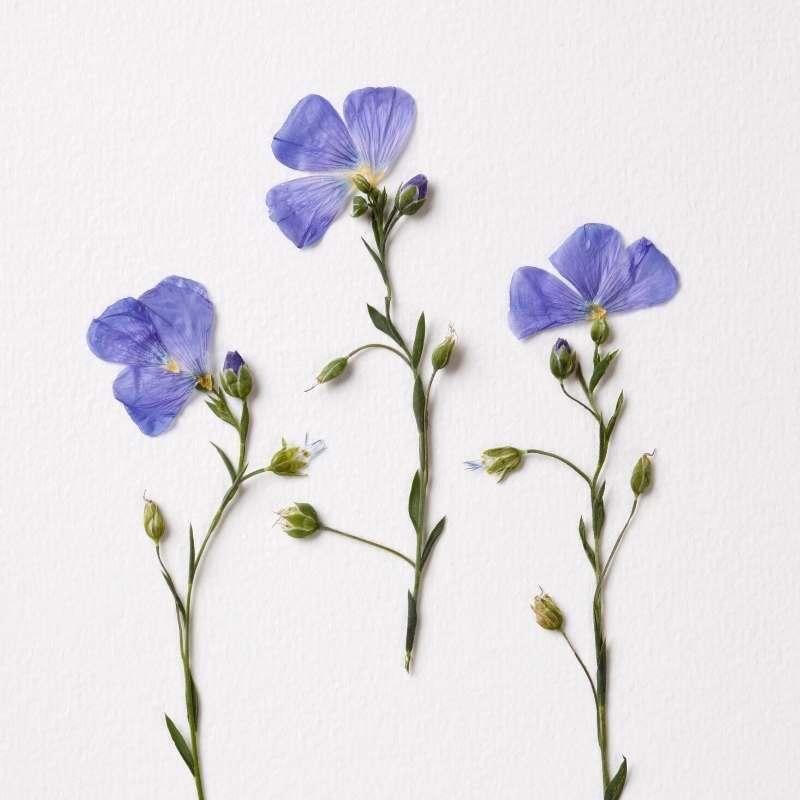 Press Flower techniques
