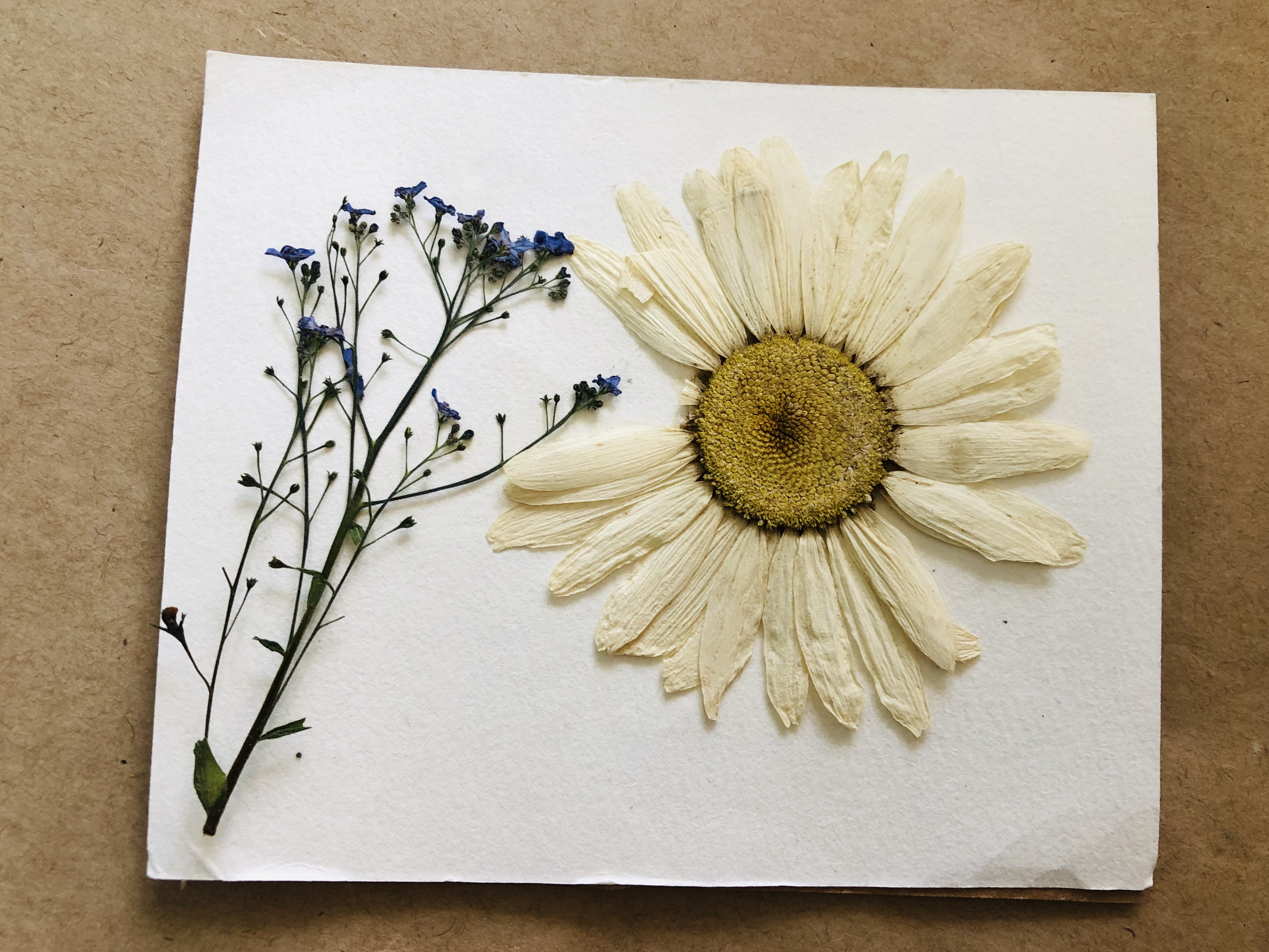 Pressed Flowers with the Simple Press