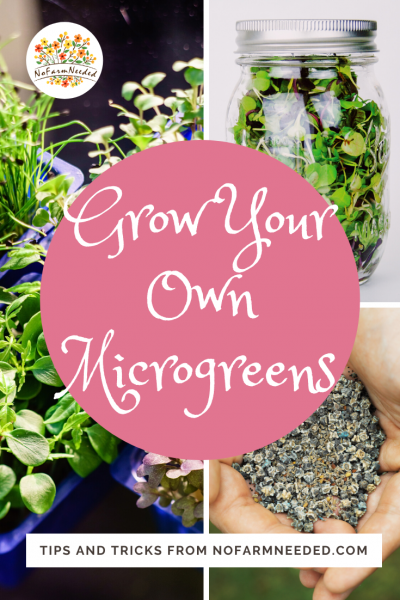 Grow Your Own Microgreens Indoors - Tips and Techniques from nofarmneeded.com