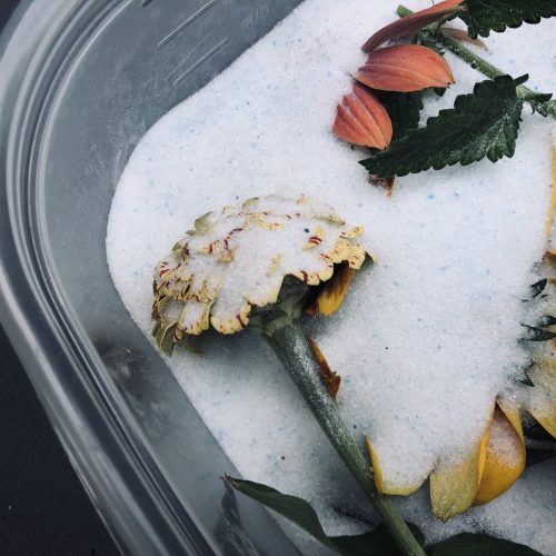 drying with silica gel flowers