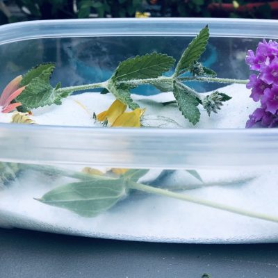 drying with silica gel container