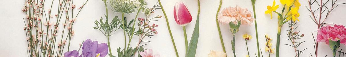 Flowers NoFarmNeeded