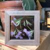 Purple Dianthus Keepsake Cube - Pressed Botanical Holiday Gift