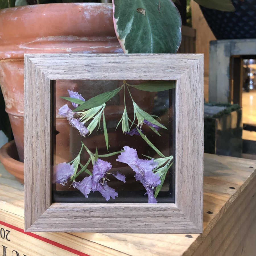 Purple Dianthus Keepsake Cube - Pressed Botanical Holiday Gift