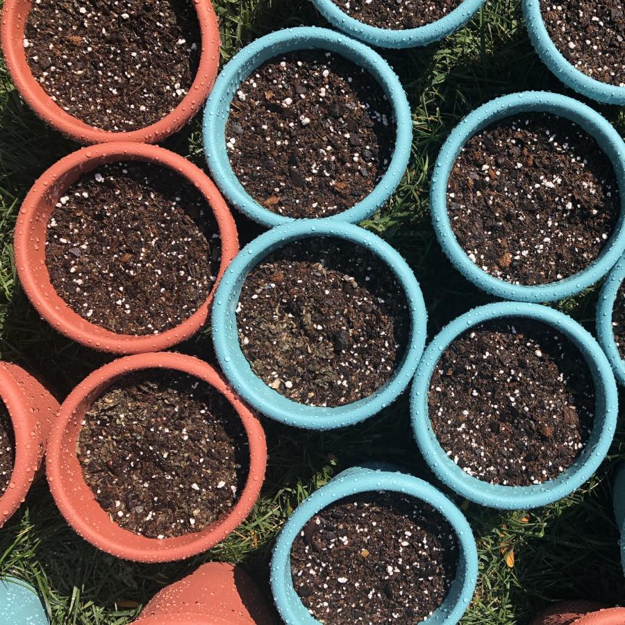 Pots for Tea Plant NoFarmNeeded