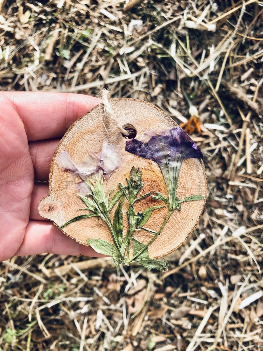 Dianthus pressed botanical ornament nofarmneeded