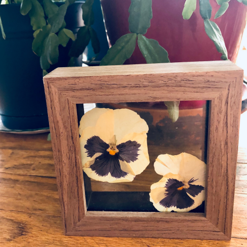 pressed botanical pansy keepsake cube